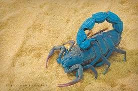Blue_Scorpion2